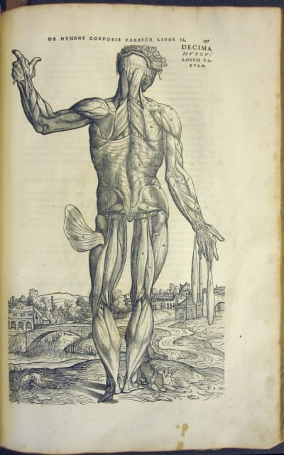 A woodblock engraving from 'De Fabrica'